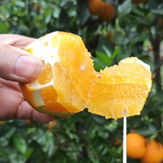漳州平和县 福建橙子夏橙三月橙5斤装
