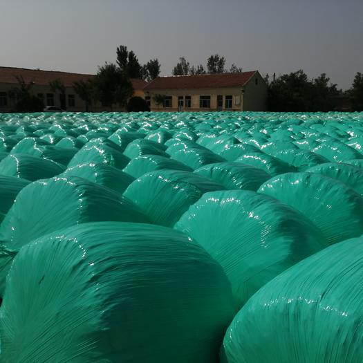 滨州阳信县 优质玉米青贮 无土无霉变 质量保证 千吨出售