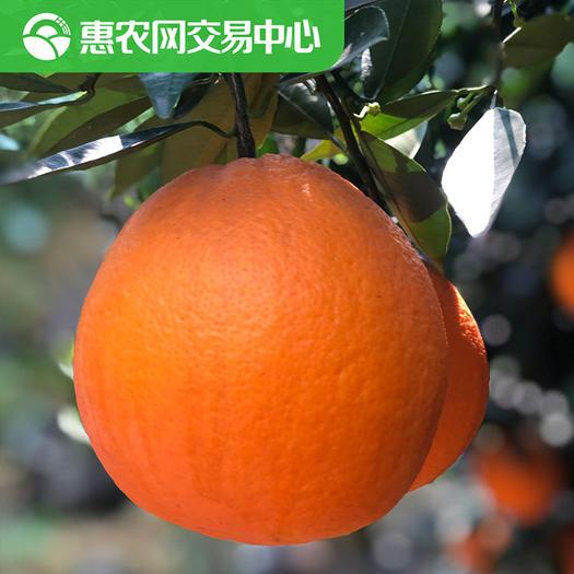 宜昌秭归县 伦晚脐橙【惠农网官方】秭归脐橙/电商微商团购专拍
