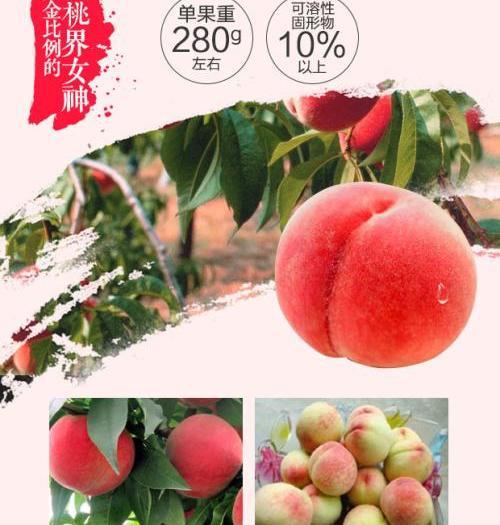成都新津縣 單果五兩以上,精品禮盒裝。成都本地,生態種植,胭脂脆桃。