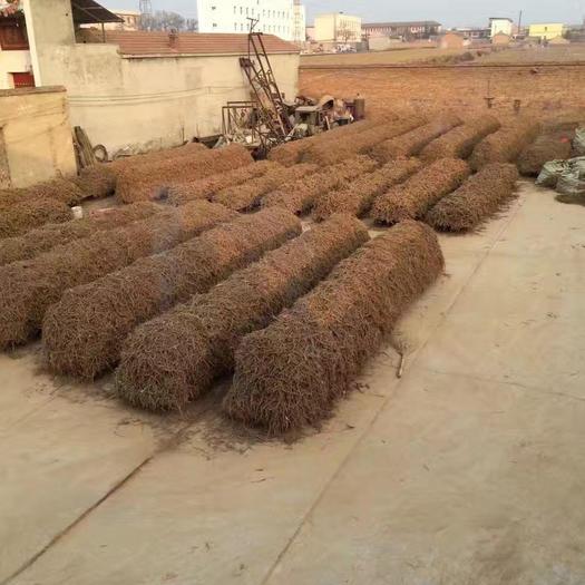 運城萬榮縣 家種黃芩50噸出統條/個子23元/公斤