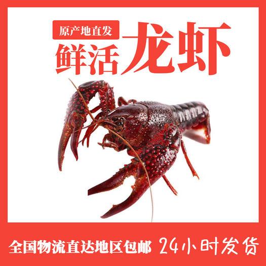 潜江市 湖北清水小龙虾 鲜活 规格硬价格更美