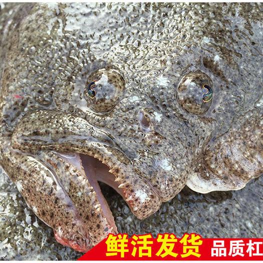 连云港 包邮新鲜多宝鱼银屏鱼比目鱼冷冻偏口鱼