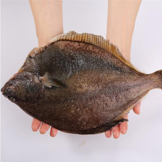 连云港 【包邮】黄金鲽鱼新鲜比目鱼鲜*速冻牙片鱼海鲜扁宝鱼