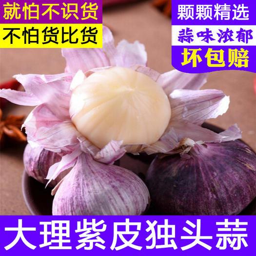 大理市 云南新鮮大蒜頭批發農產品現挖鮮蒜糖醋干紫皮大獨蒜頭一件代發