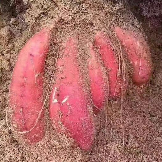 漳浦縣 2019漳浦六鰲紅薯 2.5兩到1斤   凈重5斤裝包郵