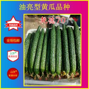 乾德系列黄瓜种子 乾德70,越夏黄瓜好品种