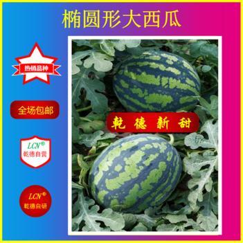 西瓜种子 乾德新甜,西瓜好品种,口感好,抗病,粉瓤,中早熟