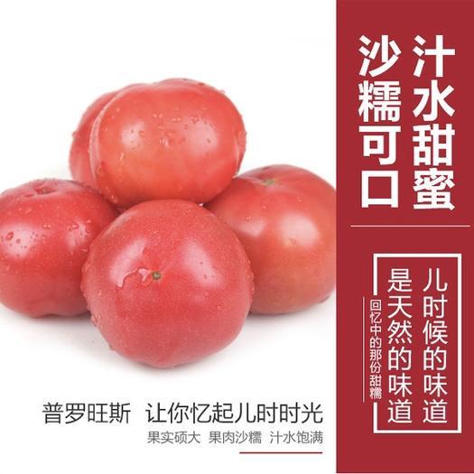 廊坊 經典普羅旺斯西紅柿