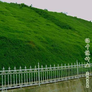 护坡草种子  护坡草新种子包邮水库矿山改造高速路旁护坡专用