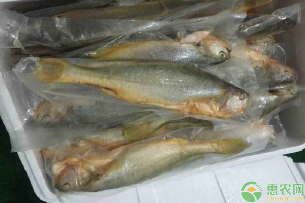 三黄鱼价格