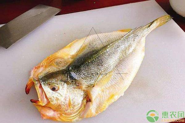 三黄鱼做法