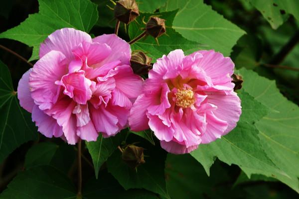 九月开什么花?这些花卉品种要记得!
