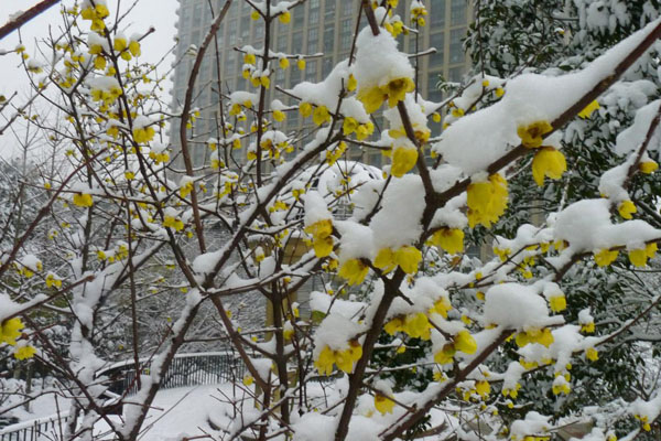 冬天有什么花?这10种花不怕冻照常开!