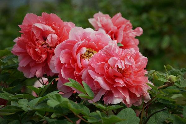 """中国十大名花是指哪些?哪种花是""""花魁""""?"""