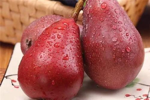 适合北方栽培的西洋梨品种介绍