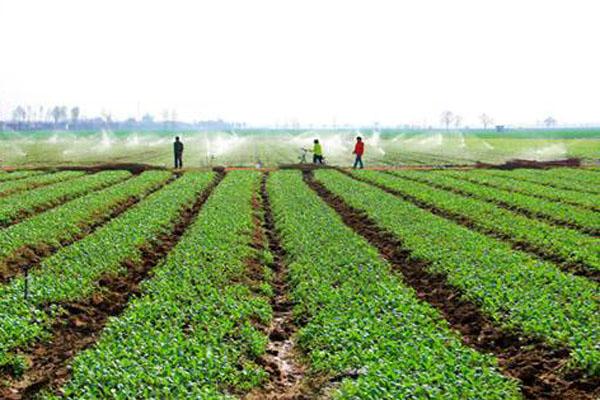醴陵市农业种植有哪些补贴?多少钱一亩?