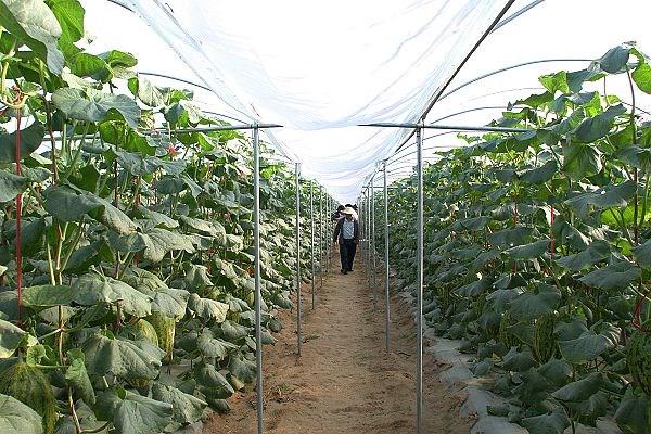 广西农业种植都有哪些补贴?可以领多少钱?