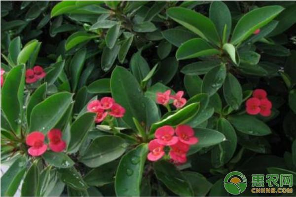 你知道花卉怎么分类吗?教你最常见的四种