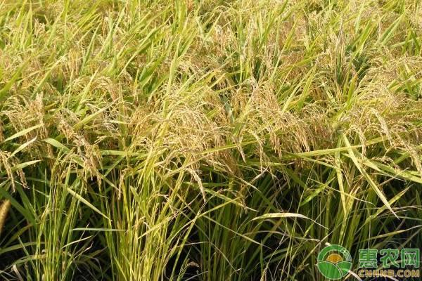 种粮食不赚钱,为何还有很多农民种?原因