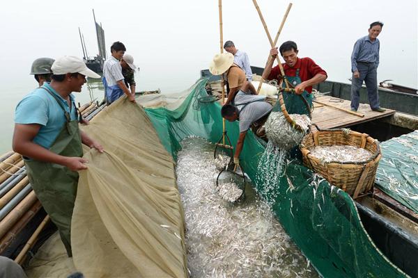 长江无鱼之困的根本原因是什么?现在长江无鱼到什么地步了?