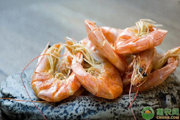 虾干要怎么晒?虾干的营养功效如何?