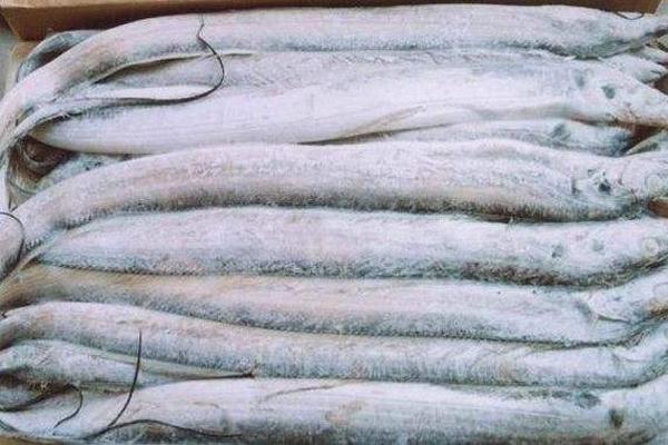 带鱼批发多少钱一斤?市场上带鱼为什么都是死的?