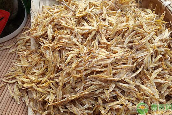 麦鱼多少钱一斤?麦鱼的功效与作用