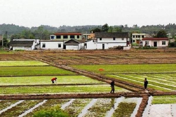 17个试点省份耕地轮作休耕3000万亩!补贴方式是怎样的?