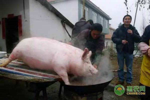 农村杀猪过年的习俗和禁忌