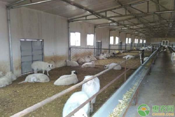 养一百只羊需要多大的场地面积?