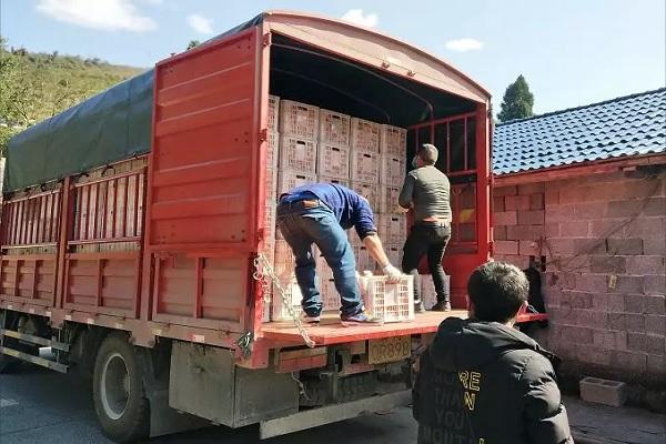 借线上抖音培训之势,学员紧急助销泸溪椪柑38000斤!