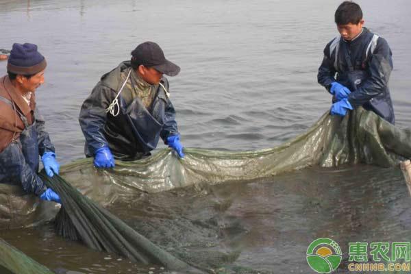 钓泥鳅用什么饵料好?有哪些钓法?
