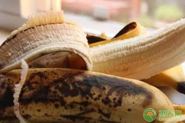 香蕉为什么会变黑?香蕉变黑了还能吃吗?