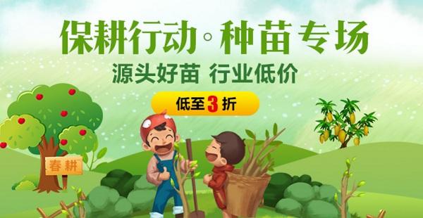 杨树有哪些危害?现在还可以种杨树吗?