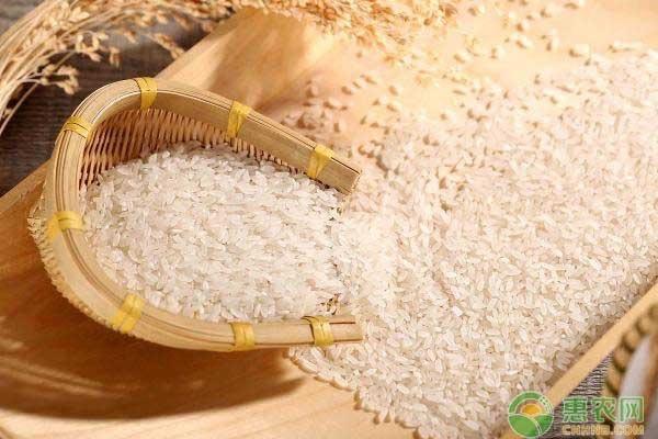 今日大米价格多少钱一斤?附最新大米行情走势分析