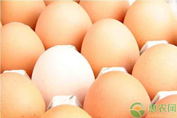 今日鸡蛋价格多少钱一斤?2020下半年鸡蛋价格走势如何?