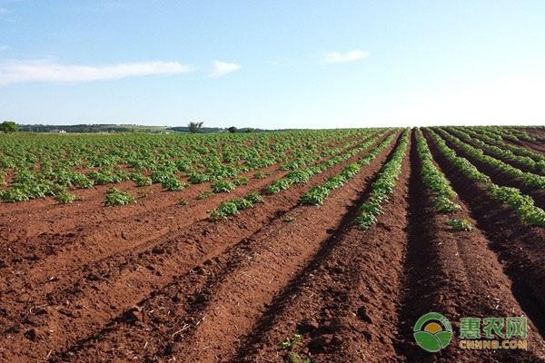 土地承包到期后该怎么处理?2020年农村土地承包有哪些新规定?