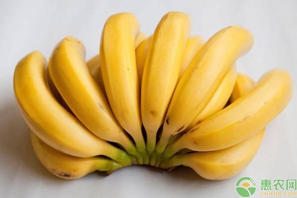 香蕉的热量高不高?一天吃几根香蕉合适?