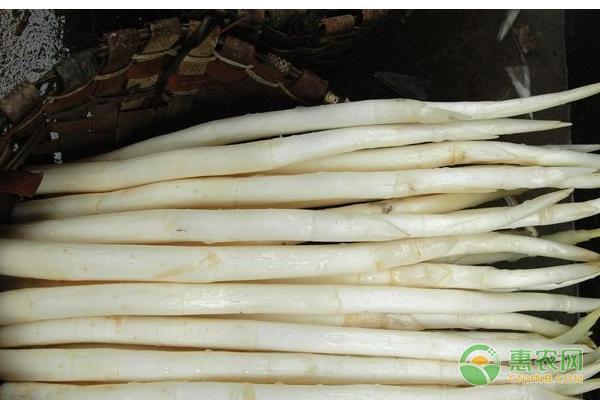 象牙菜多少钱一斤?市场前景如何?(附栽培技术)