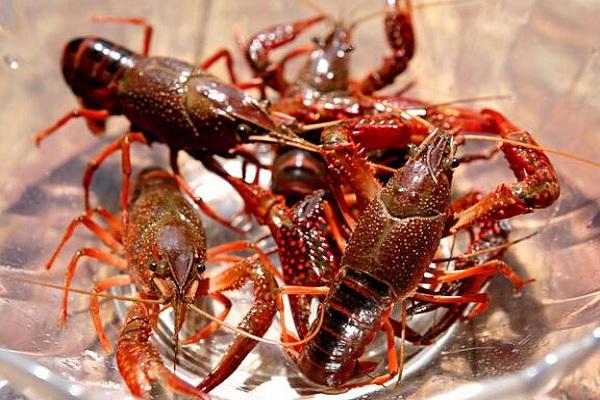 湖北的小龙虾现在敢吃吗?疫情对小龙虾有何影响?