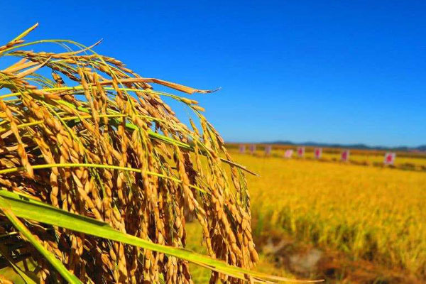 2020年农业补贴人群有哪些?如何申请?