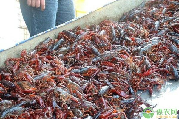 2020年小龙虾多少钱一斤?在疫情的影响下,小龙虾如何发展?