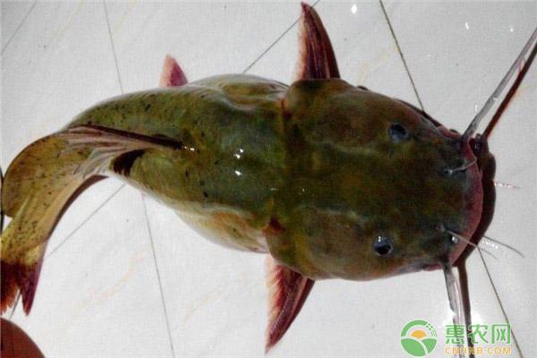 2020年养殖什么鱼赚钱?养这几种鱼年收入十万不是问题!