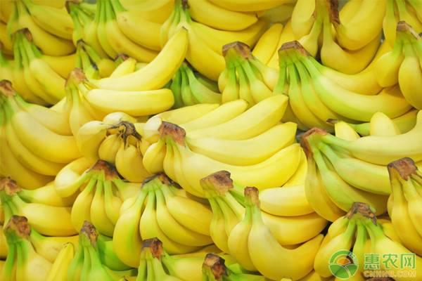 香蕉产地和品种