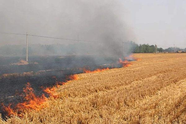 秸秆焚烧政策:黑龙江坚决禁止,吉林省允许有计划焚烧!