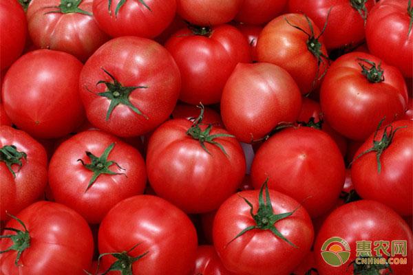 今日西红柿多少钱一斤?2020年西红柿最新价格行情分析