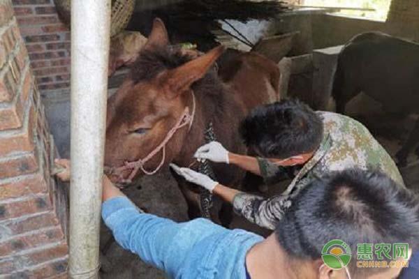 非洲马瘟疫情是怎么回事?是否会对我国产生威胁?