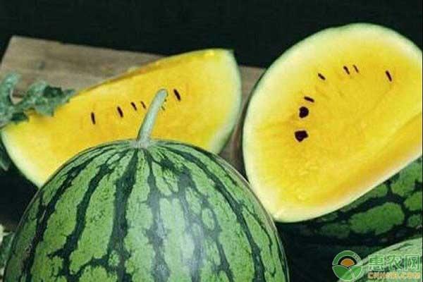 黄瓤西瓜价格为什么贵?黄瓤西瓜和红瓤西瓜有何区别?