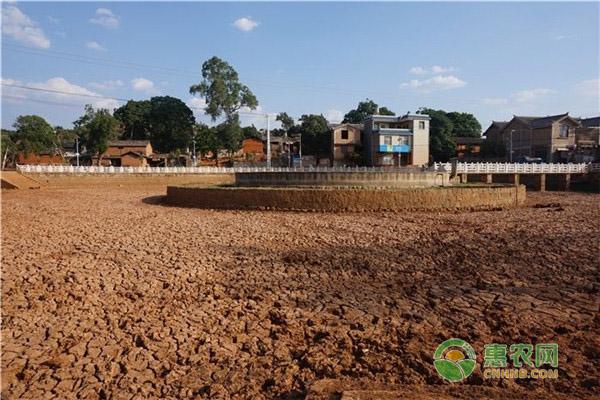 2020年一季度云南旱情有哪些表现特点?政府开展了什么措施?